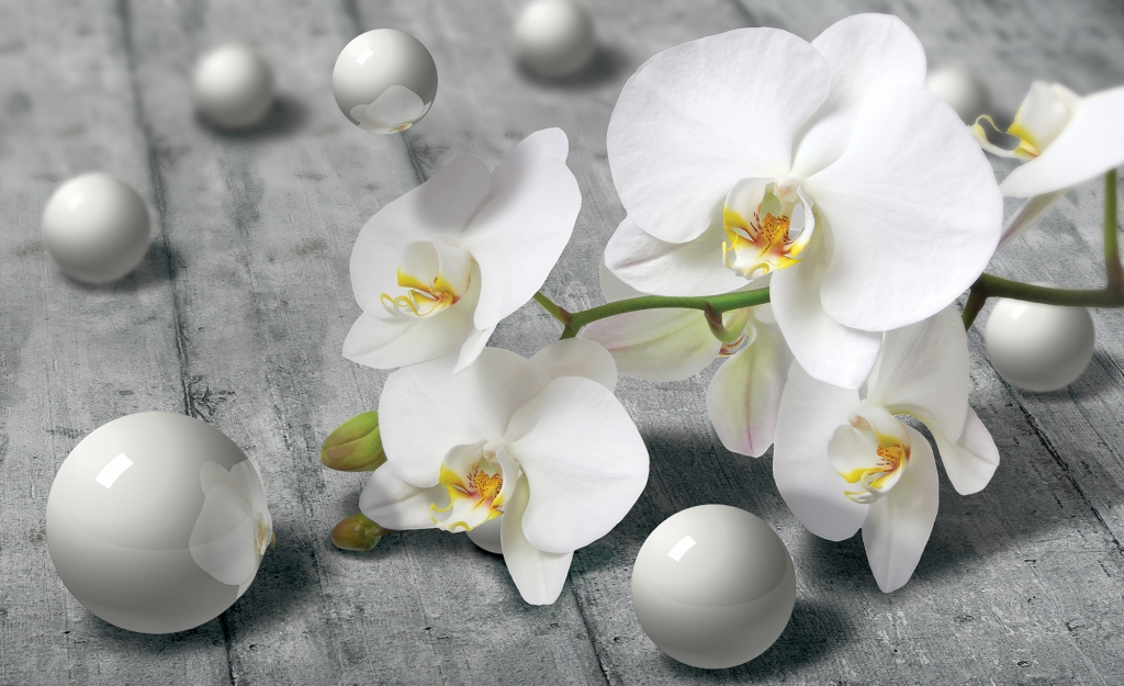 продырявливает красивые цветы картинки и фотообои теней играет важную