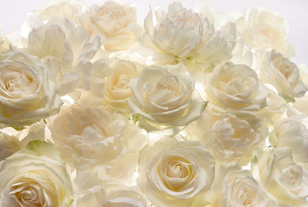 Фотообои белые розы купить заказ цветов с доставкой пермь кировский р-н