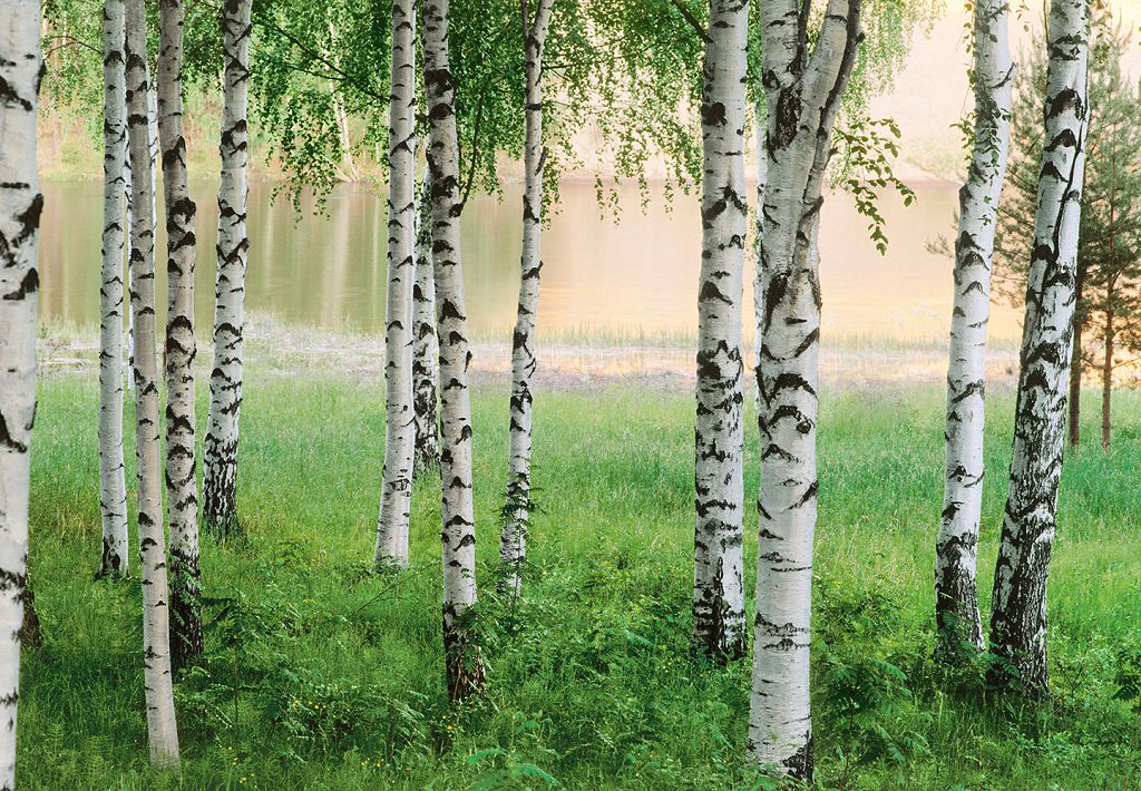 фотообои на стену природа: