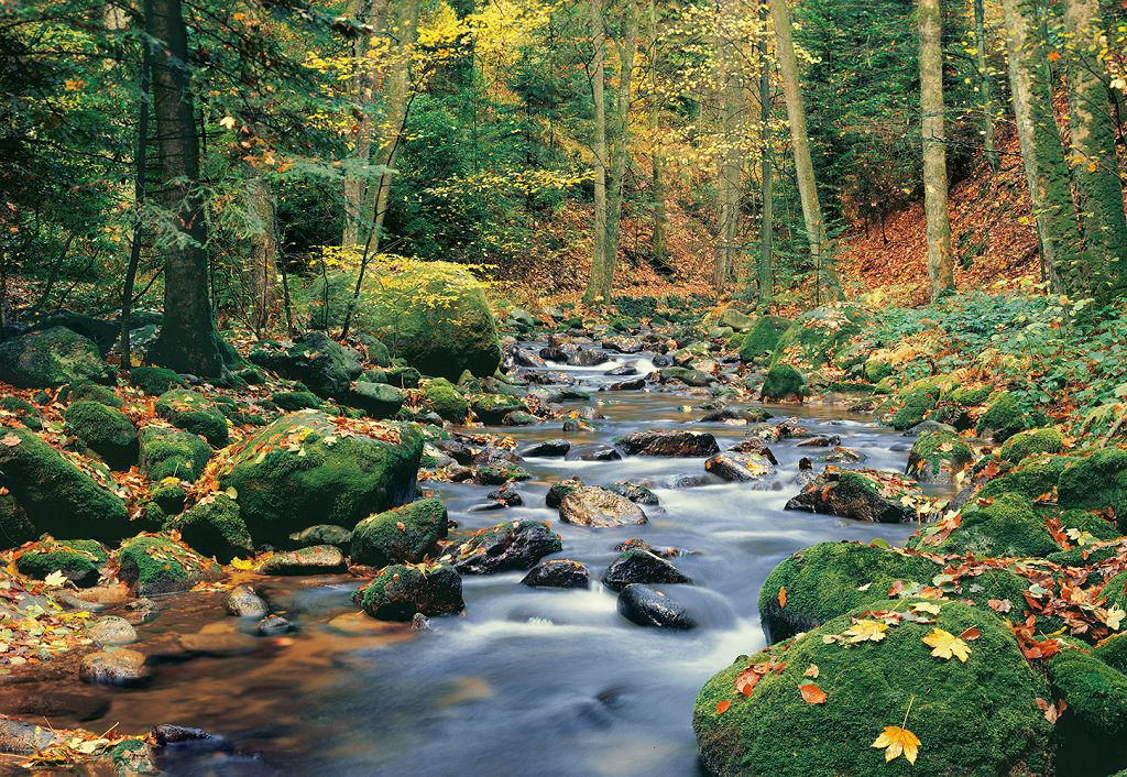 Фото ручья в природе картинки